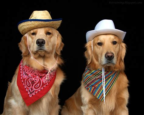 country dogs bz dogs city country