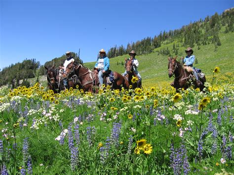 Wyoming Wildflowers The Beginning history on horseback archives ridge