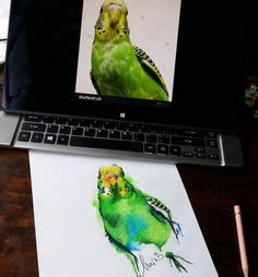 melbourne designs budgie and melbourne designs budgie and
