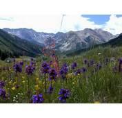 Picture Of Wildflowers In Colorado Near Aspen  Photos By Jon Barnes