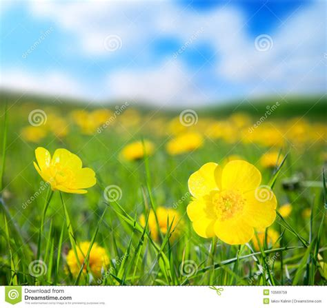 flowers  sunny day royalty  stock images image