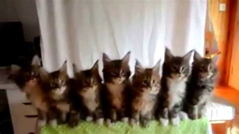 imagenes que se mueven gatos imagenes de gatos que se mueven