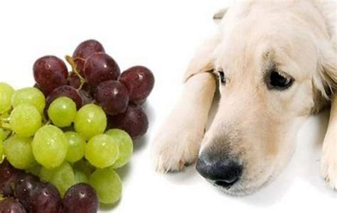 dangerous foods for dogs 10 foods not to feed your pets world