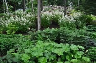 plant lover s garden hyland garden design
