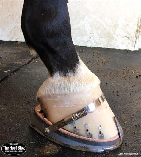 shoes for horses fran jurga s hoof news from hoofcare lameness