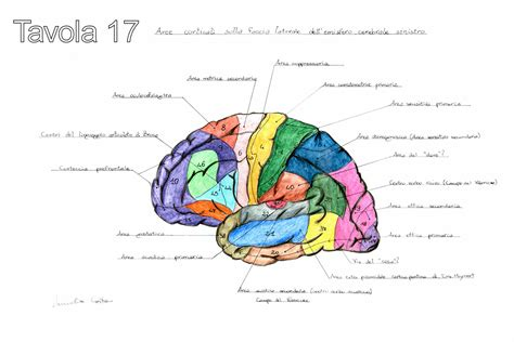 imagenes neuroanatomia pdf ciencias naturales ceuja 2016 anatom 237 a humana
