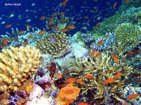 imagenes de jardines acuaticos imagenes acuaticas imagui