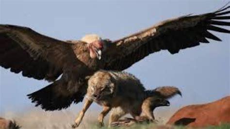 animals fighting wild animals attack animal fight
