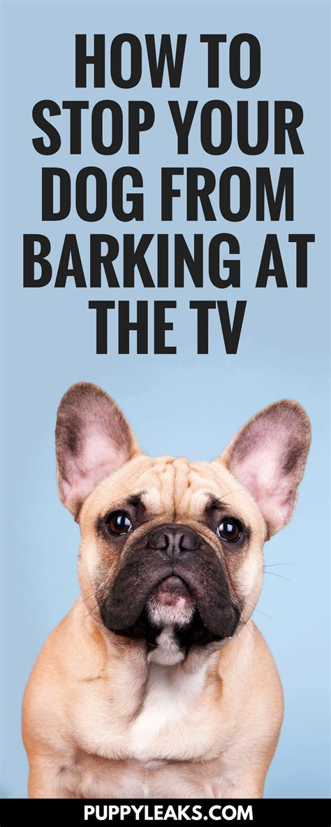 how i stopped my dog from barking at the tv puppy leaks how i stopped my dog from barking at the tv
