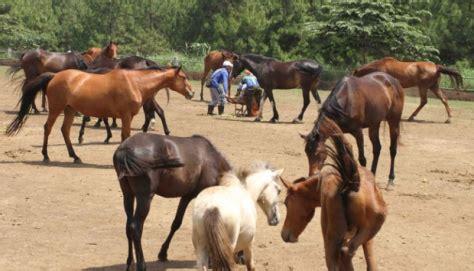 lokasi  harga tiket masuk peternakan kuda megastar batu