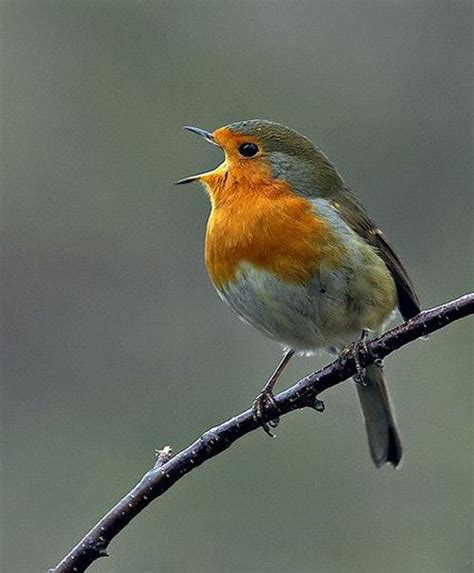 168 best images about all nature sings on pinterest