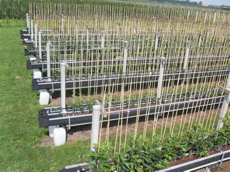 wur bloemen nieuwe teeltsystemen los van de grond voor bomen planten