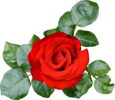 imagenes rosas sin fondo 174 gifs y fondos paz enla tormenta 174 im 193 genes de flores