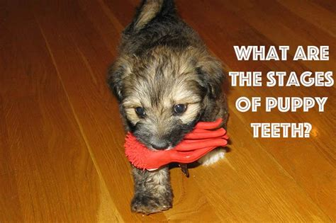 how can you tell a s age 17 best images about care puppy 101 on for dogs names and puppys