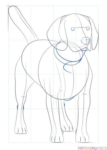 How To Draw A Beagle