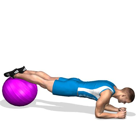 plank legs  fitball involved muscles   training
