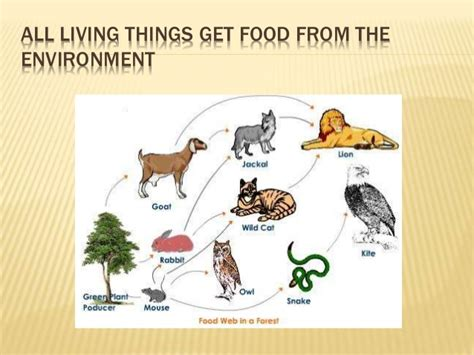 7 Inter Relationships by The Inter Relationships Between Living Things