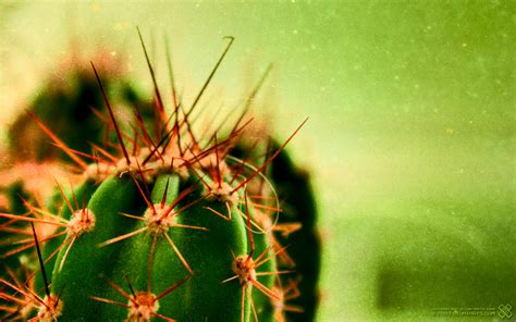 cactus planter cactus wallpapers hd pictures one hd wallpaper pictures