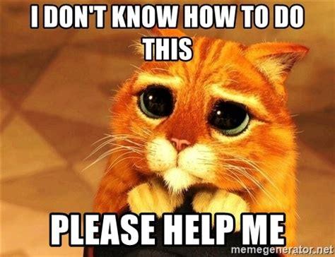 help meme i don t how to do this help me shrek cat
