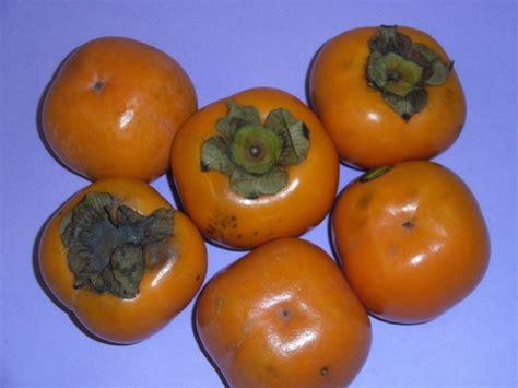 Potatura Cachi Periodo by Cachi Vaniglia Alberi Da Frutto Cachi Vaniglia