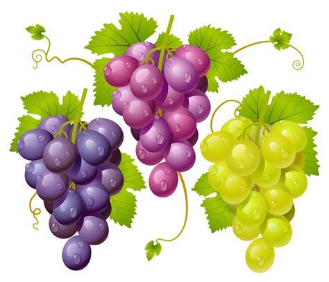 Imagenes De Uvas Kangris | banco de im 193 genes ilustraciones en 3d de racimos de uvas