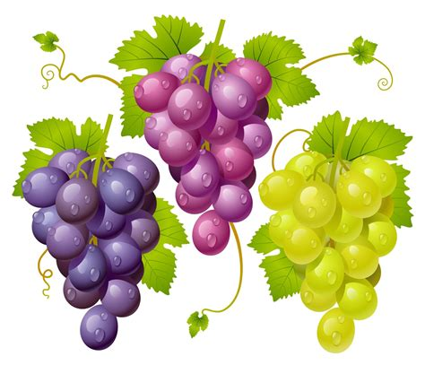 imagenes infantiles uvas racimo de uva animadas imagui
