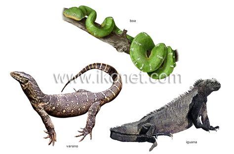 imagenes de animales vertebrados reptiles reino animal gt reptiles gt ejemplos de reptiles imagen