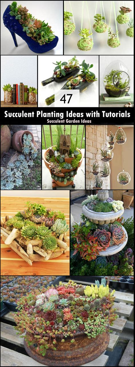 47 Succulent Planting Ideas With Tutorials Succulent Garden Planting Ideas