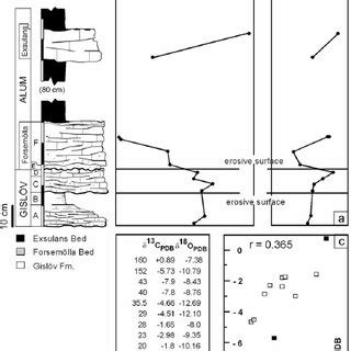 stratigraphy microaccess thin section photomicrographs of microboring textures from