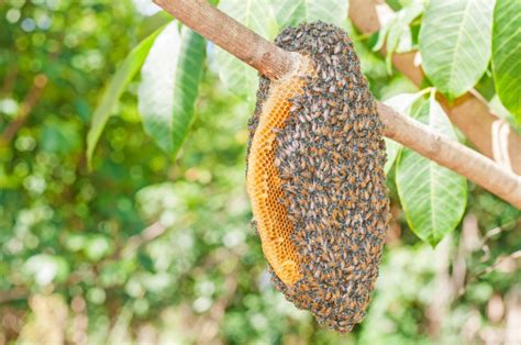 how to get rid of a beehive in your backyard getting rid of a bee or wasp nest slug a bug pest control