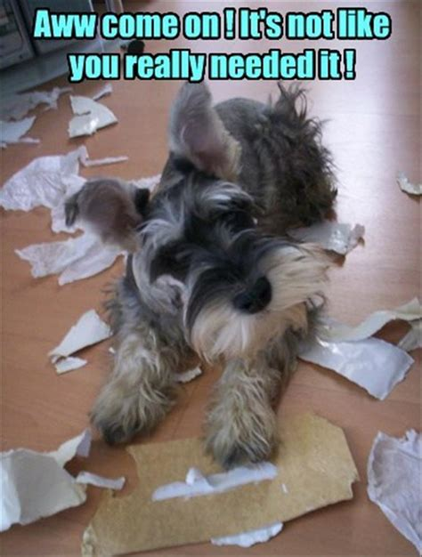 funny animal 09 07 11 22 funny animal memes and pictures of the day cute
