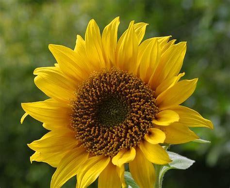 bibit bunga benih bunga mendapatkan bibit bunga terbaik