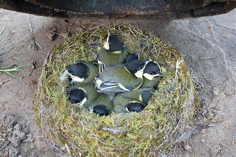 12 bird nests in unusual places get inspired by nature