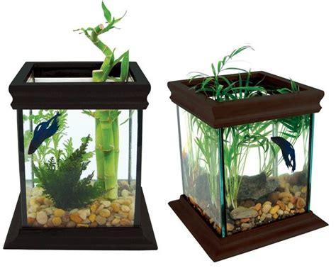desain aquarium air tawar minimalis 17 best images about betta fighter fish tank ideas on
