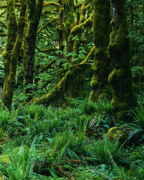 rainforest colors temperate rainforest
