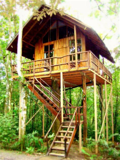 treehouse vacations hotel tree house in puntarenas costa rica