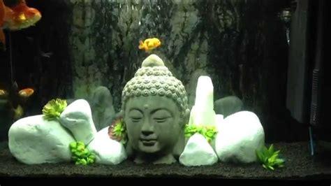 oranda testa di goldfish ranchu oranda testa di acquario zen