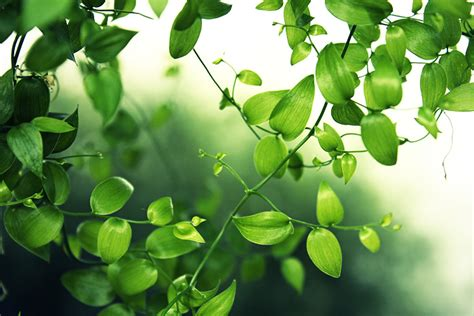 imagenes de hojas verdes fotos de hojas verdes imagui