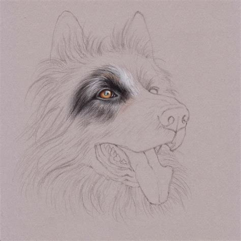 how to draw with colored pencils uart tip drawing fur with colored pencils step by step