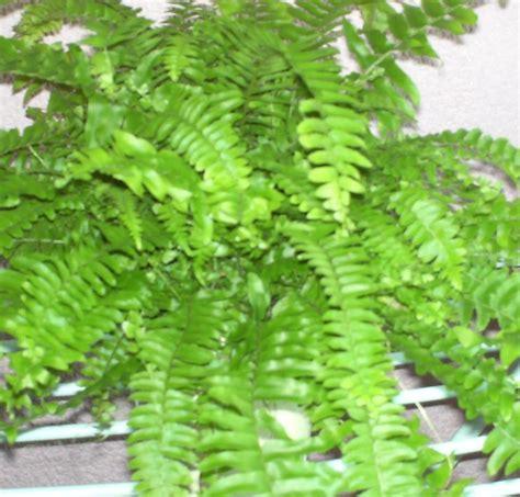 imagenes de flores y sus nombres nombre cientificos de plantas seotoolnet com