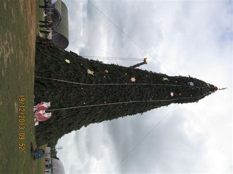 tallest and largest christmas tree in asia erected in