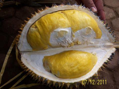 Biji Durian Candimulyo inilah 7 jenis durian yang sangat laku di pasarkan tabloid peluang usaha