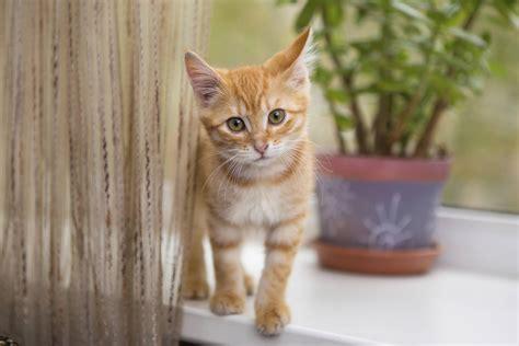 chat on l arriv 233 e du chaton
