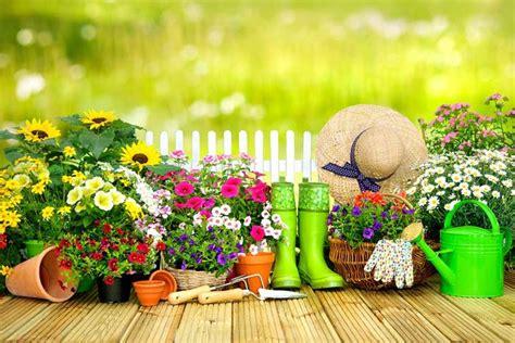 Pflegeleichte Gartenpflanzen by Pflegeleichte Gartenpflanzen F 252 R Den Effizienten G 228 Rtner