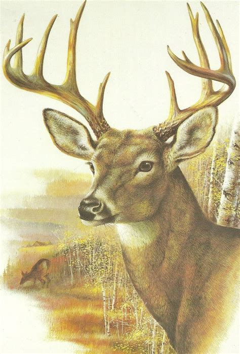 my is panting whitetaled deer panting by gumballwatterson14 on deviantart