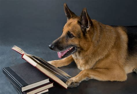 best german shepherd best german shepherd books for your summer 2017 reading list