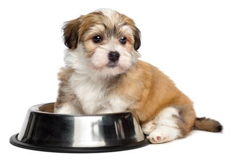 best grain free puppy food top 7 best grain free puppy food brands in 2017