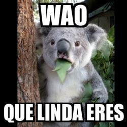 Wao Meme - meme koala wao que linda eres 6283478