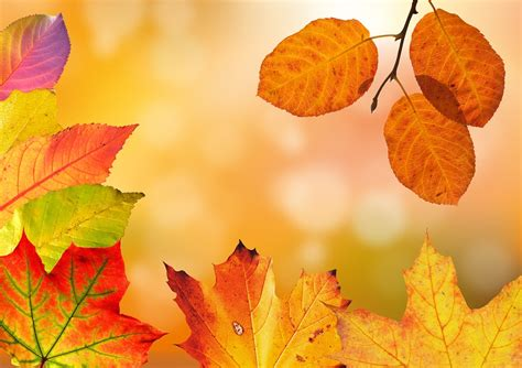Kostenlose Bilder Herbst by Autumn Leaves Colorful Fall 183 Free Photo On Pixabay