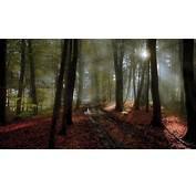 Nature Landscape Path Mist Forest Sunlight Leaves